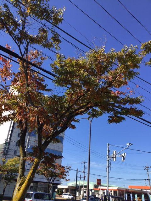 秋の色付き